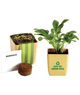 Herb & Flower Pots